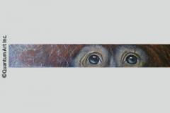 Orangutan Eyes